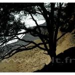Gilt Paysages Mer N° : M17