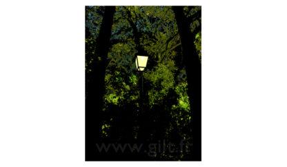 Lampadère alumé et Arbres - Bois de la Chaise Gilt Paysages Urbains N°: PU16