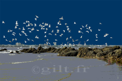 Envol des Mouettes – Estuaire de la Loire - Gilt réf.: M01 - Thème Mer - Estampe