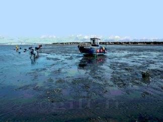 Pêche à pied - Grande Marée - Estuaire de la Loire - Gilt réf.: M27 - Thème Mer - Estampe
