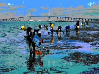 Pêche à pied - Pont de Saint-Nazaire - Estuaire de la Loire - Gilt réf.: M28 - Thème Mer - Estampe