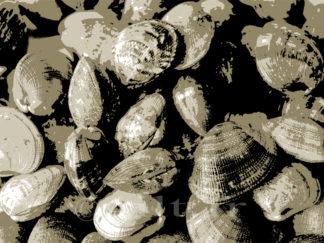 Les Palourdes - Gilt réf.: M30 - Thème Mer - Estampe