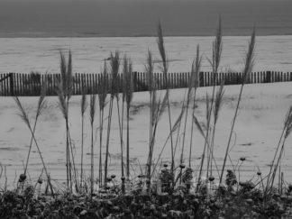 Neige sur la Plage - Plantes et Ganivelle - Gilt réf.: M43 - Thème Mer - Estampe