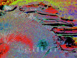 Tronc scié et champignons colorés Gilt réf.: AM06 - Thème Arbres et Mousses - Estampe
