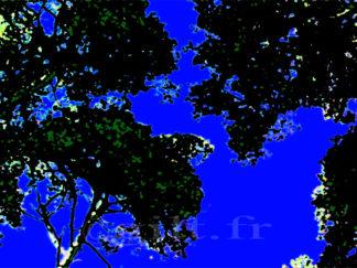 Contre jour - Cime d'arbres - Ciel bleu azur Gilt réf.: AM11 - Thème Arbres et Mousses - Estampe