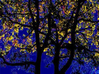 Arbres feuilles jaunes sur fond bleu nuit Gilt réf.: AM13 - Thème Arbres et Mousses - Estampe