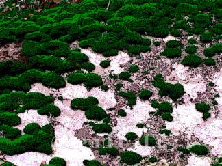 Mousses sur rocaille Gilt réf.: AM14 - Thème Arbres et Mousses - Estampe