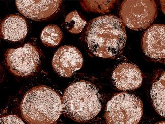 Stère - Troncs d'arbres Gilt réf.: AM23 - Thème Arbres et Mousses - Estampe