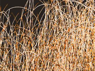 Herbes sèches sur fond brun Gilt réf.: AM25 - Thème Arbres et Mousses - Estampe