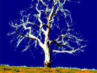 Arbre blanc sur ciel bleu Gilt réf.: AM26 - Thème Arbres et Mousses - Estampe